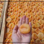 سایت صادرات زردآلو با کیفیت ایرانی