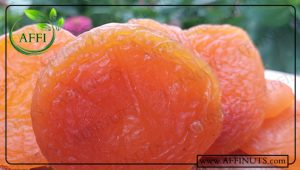 فروش انواع زردآلو باکیفیت