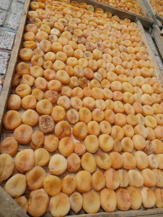 خرید و فروش زردآلو تازه و با کیفیت