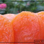 صادرات انواع قیسی زردآلو آفتابی
