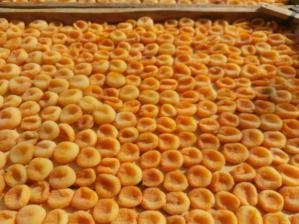 بازرگانی صادرات قیسی زردآلو
