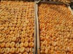 صادرات بهترین نوع زردآلو ایرانی