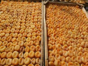 مرکز صادرات قیسی زردآلو تبریز در ایران